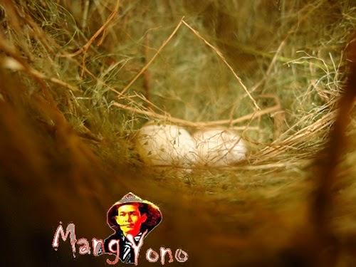 Telur Burung pipit di halaman rumah-Blog mang yono