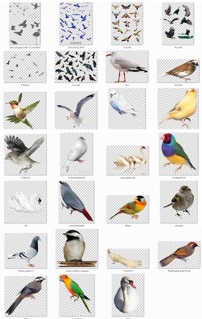 cut out birds #1b