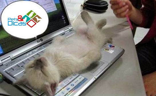 Gato deitado em notebook