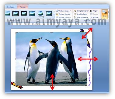 Gambar:  Mengatur area cropping / pemotongan gambar di powerpoint