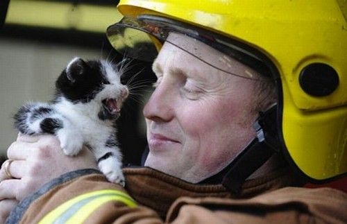 amazing animal rescue pictures