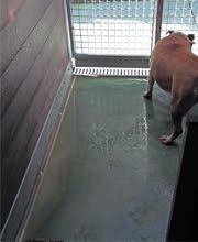 ¿Desde cuándo la humedad es buena para los perros?