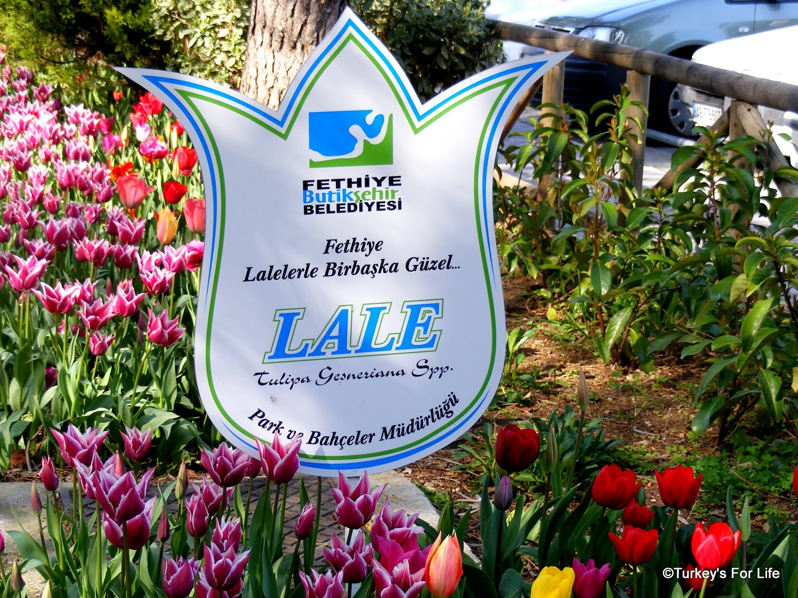 http://1.bp.blogspot.com/-7BXrdyt7h38/T1z6Kji_-5I/AAAAAAAAD9w/cvh2ywDycD0/s1600/Fethiye+Tulips+Turkey-1.JPG