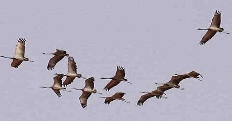 الطيور تحلق فوق قبر معمر القذافي وتكشف مكانه السري