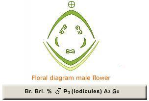 To my deepak sir shyam s vyas lesson 8 morphology of flowering to my deepak sir shyam s vyas lesson 8 morphology of flowering plants ccuart Image collections