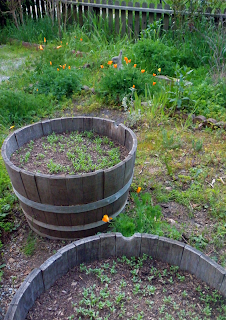 Barrels with Larger Seedlings