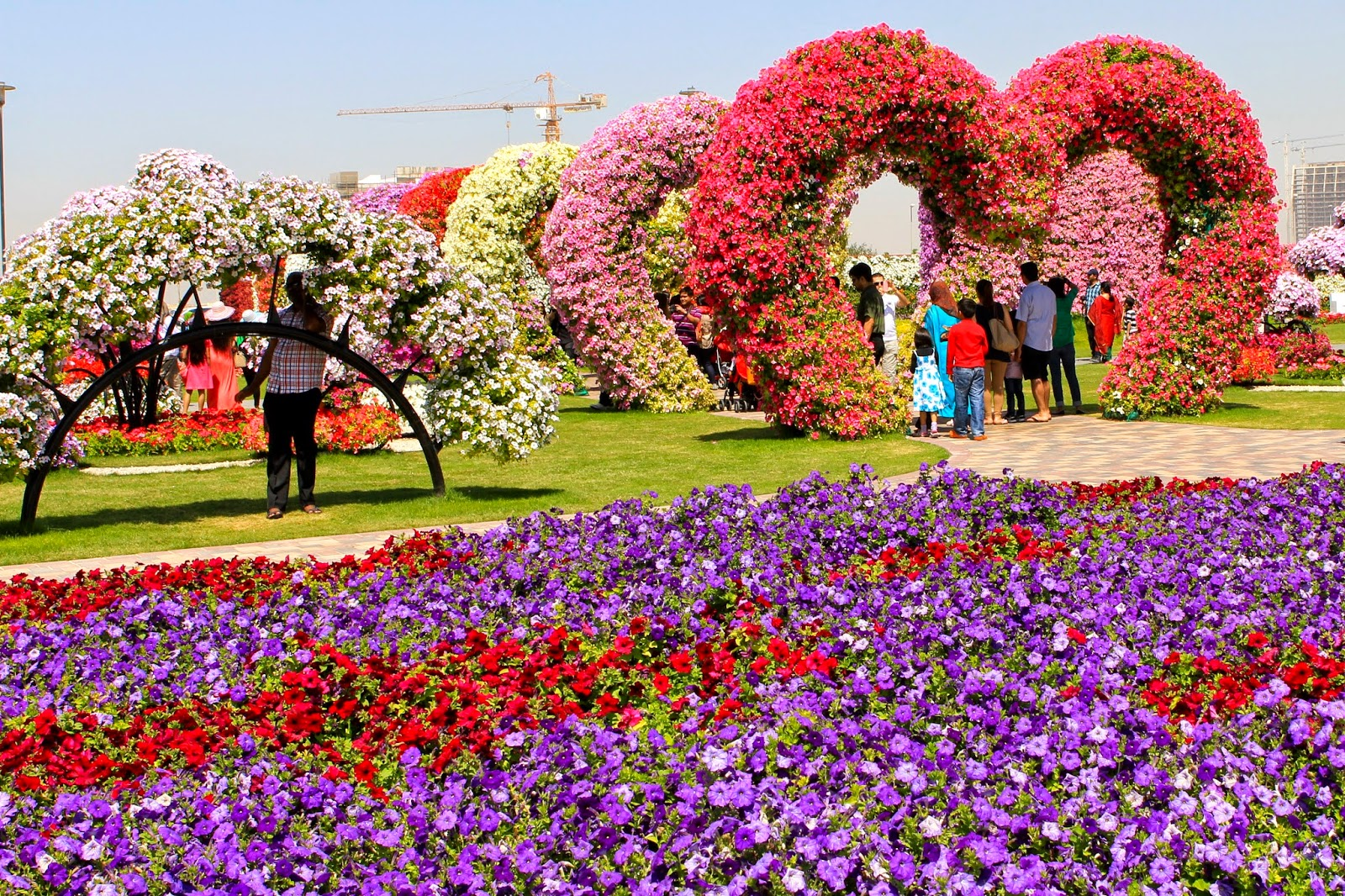 anything under the sun dubai miracle garden