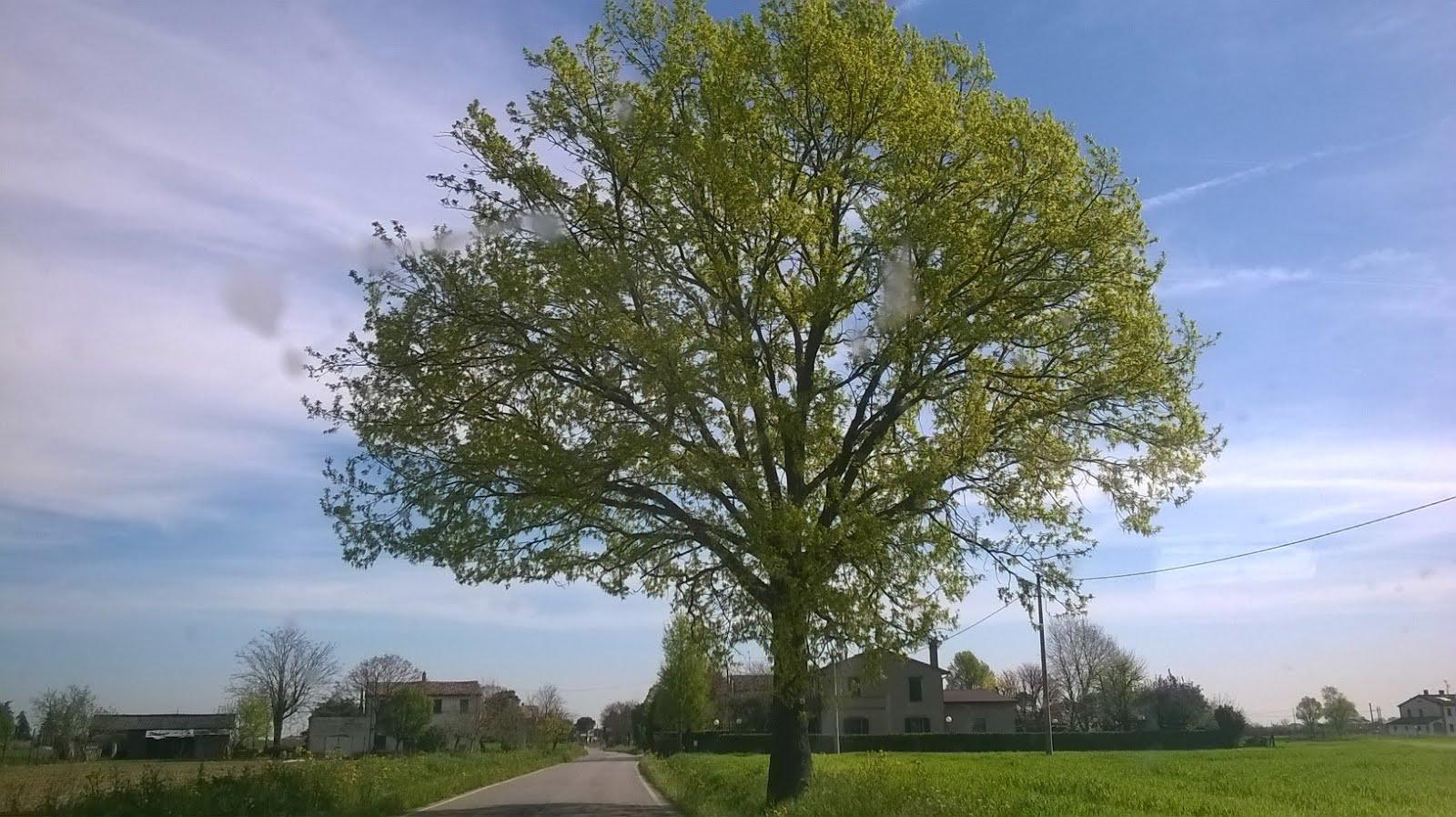 """Il """"mio"""" albero....verso Meldola  Aprile 2015"""