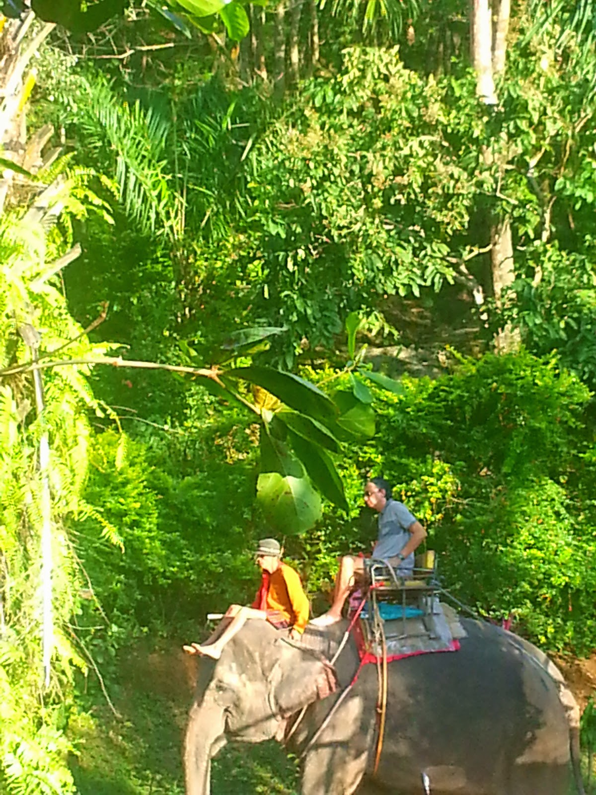 Kok Chang Elephant Trekking - Phuket
