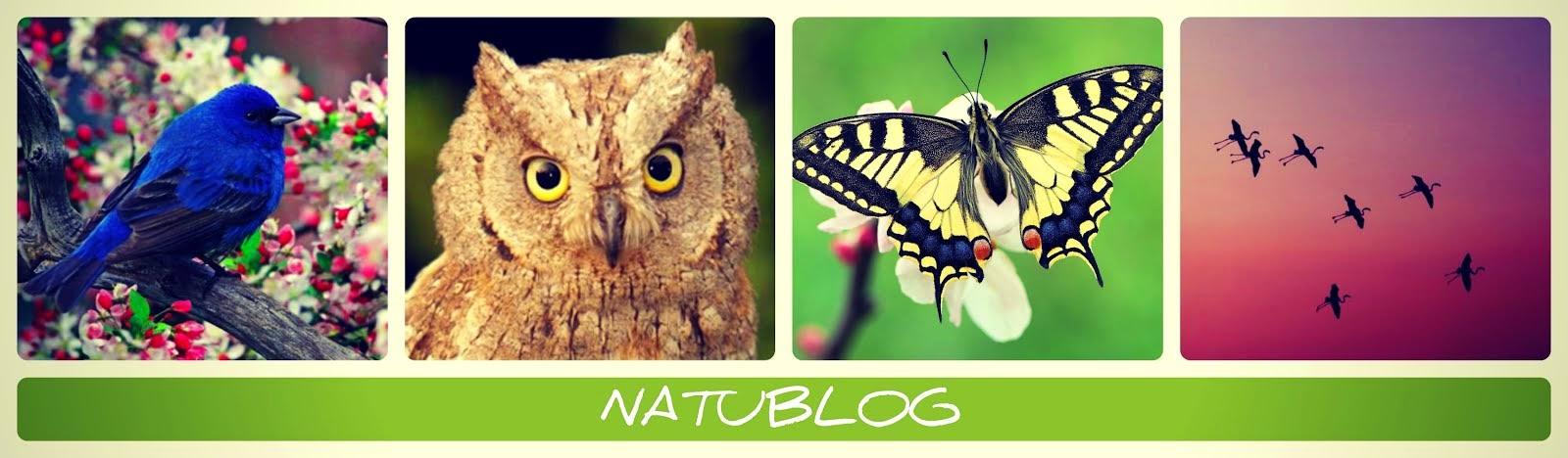 NATUBLOG