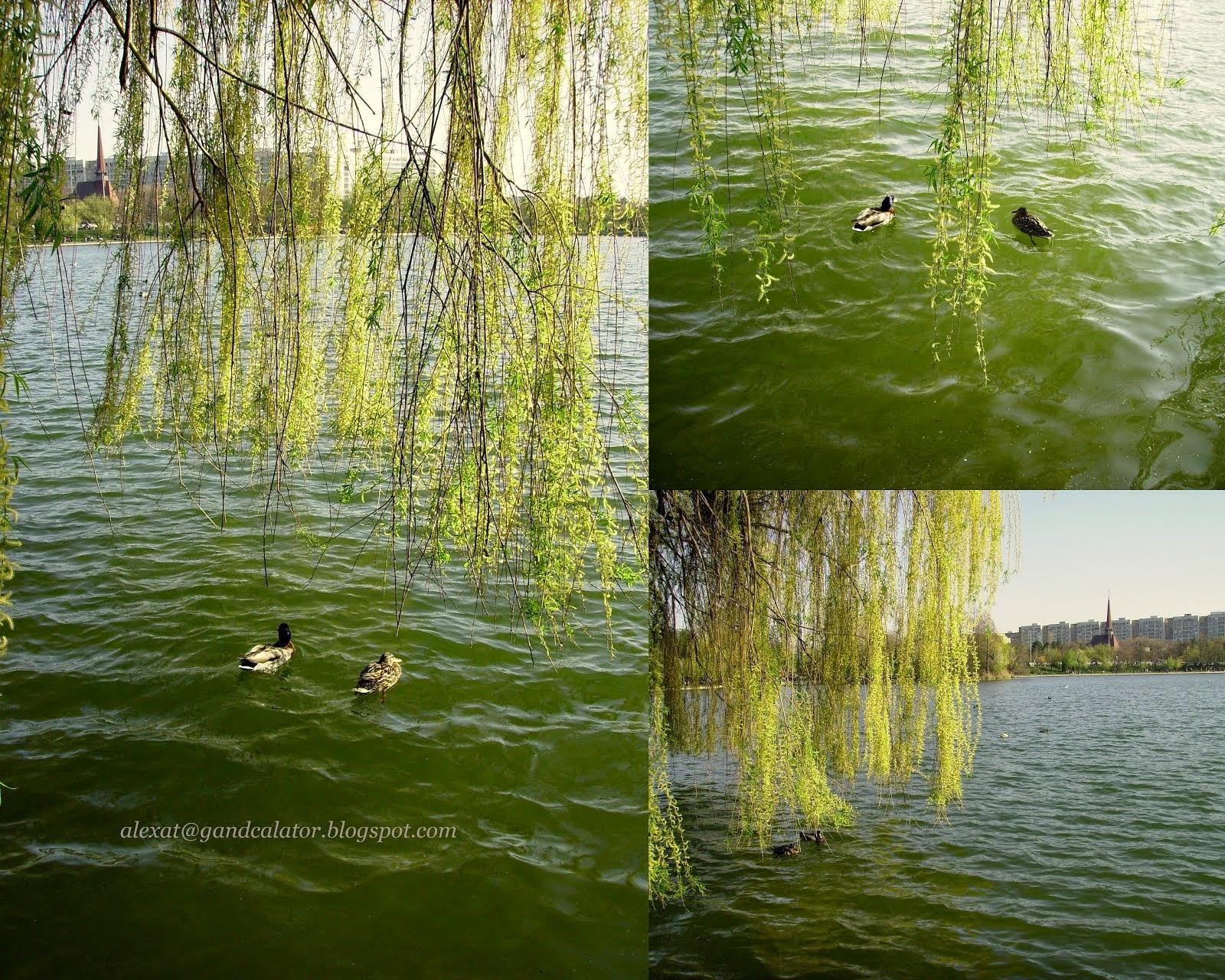 A Walk of Spring along the lake. Plimbare primăvăratică de-a lungul lacului.