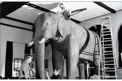 Uniknya Fakta-Fakta Tentang Gajah
