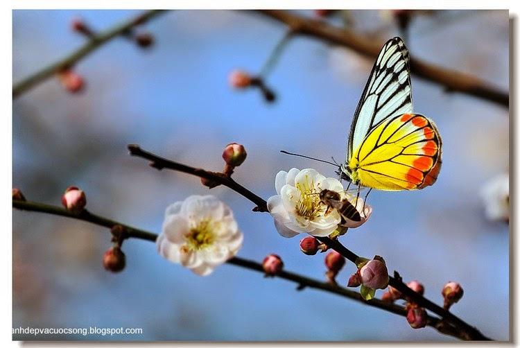 Con bướm xuân 2