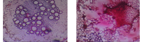 hasil gambar jual kamera mikroskop