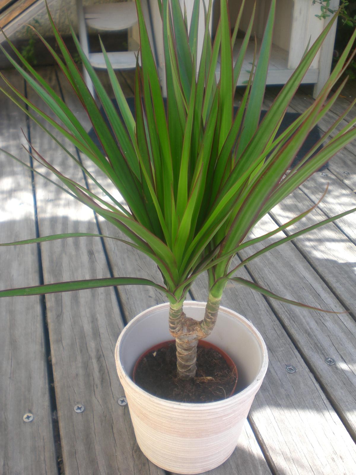 plante verte 1 euro