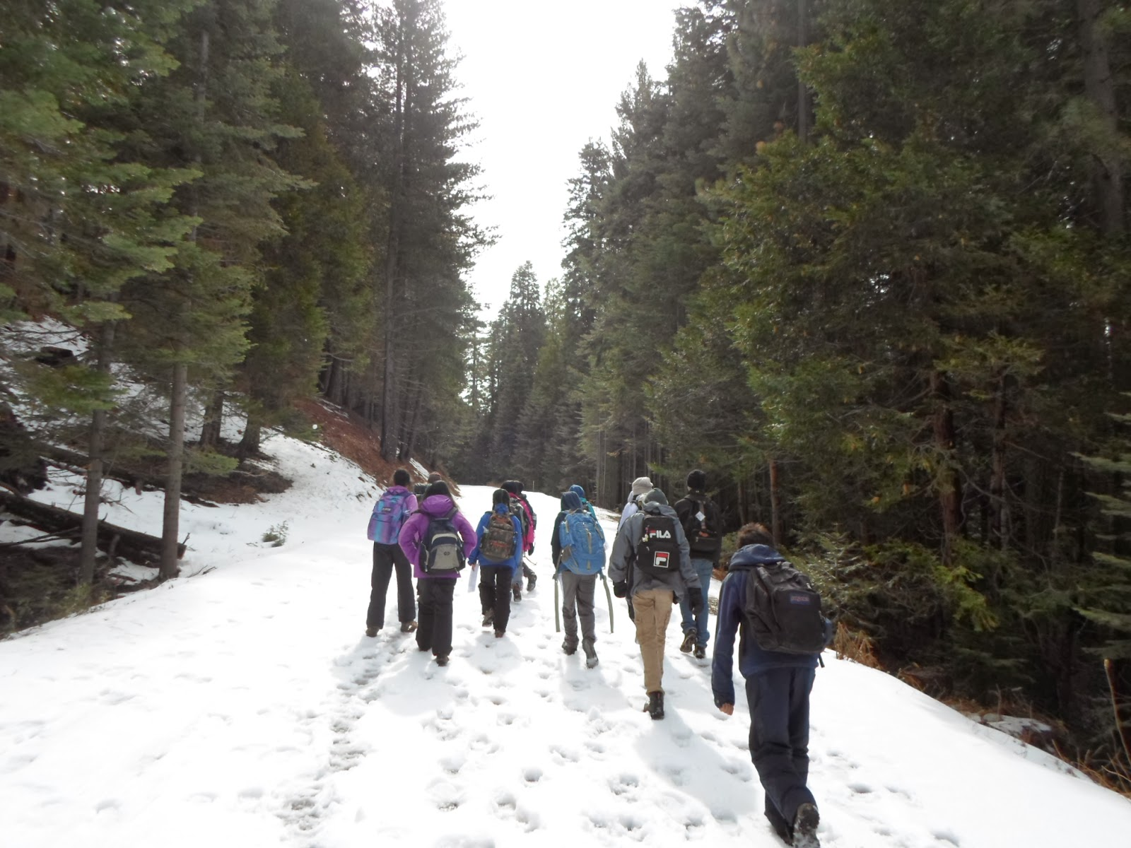Walk with Sandra Yosemite National Park An Educational Visit