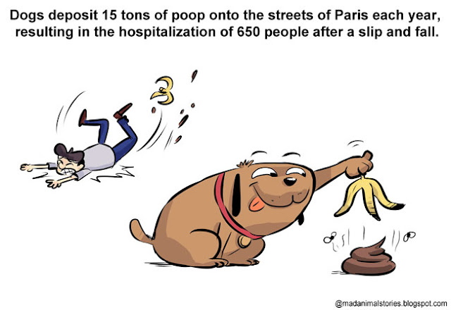 Dogs deposit 15 tons of poop onto the streets of Paris each year, resulting in the hospitalization of 650 people after a slip and fall.