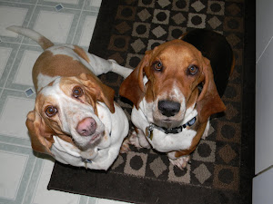The Hounds waiting for something yummy!