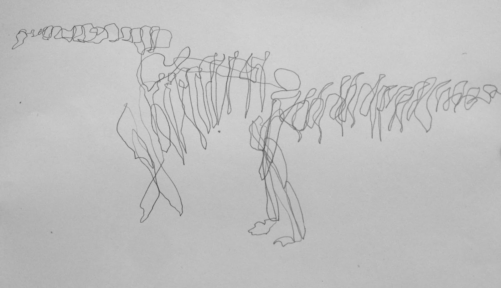 Blind Contour Line Drawing Definition : Berlin drawing room drawings from the naturkundemuseum