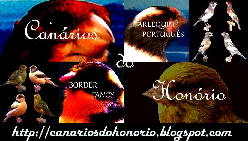 Canários do Honório- Arlequim português e Border Fancy