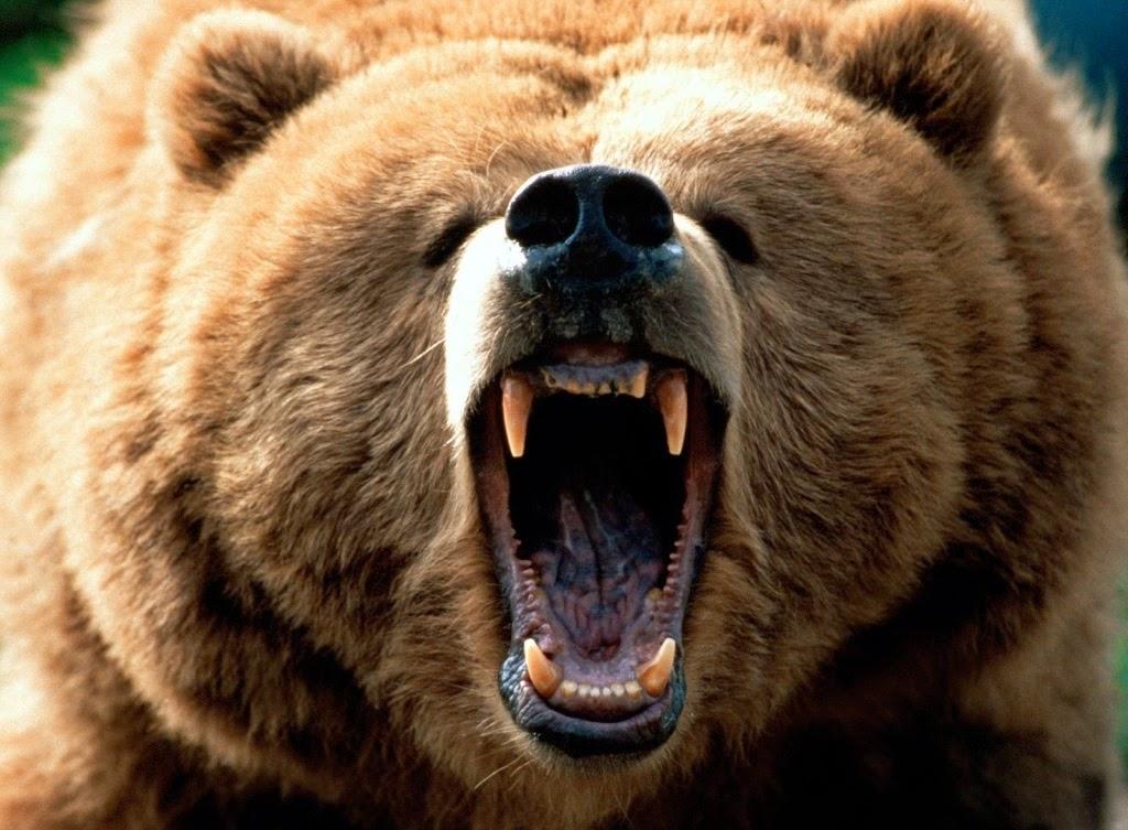 - Зачем ты сюда забрался? - строго спросил Медведь, скаля зубастую пасть.