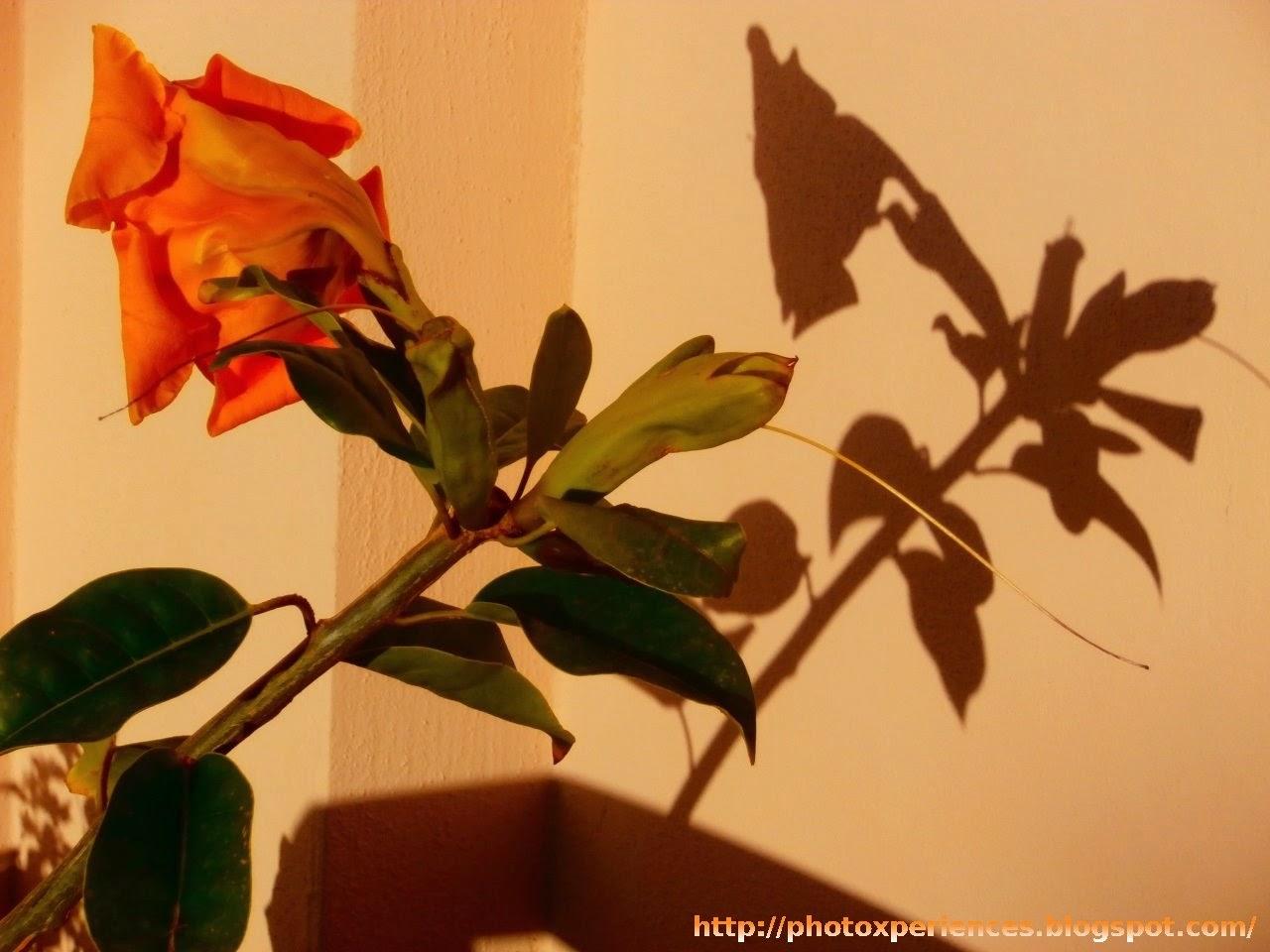 Flowers in Nerja. Flores en Nerja.