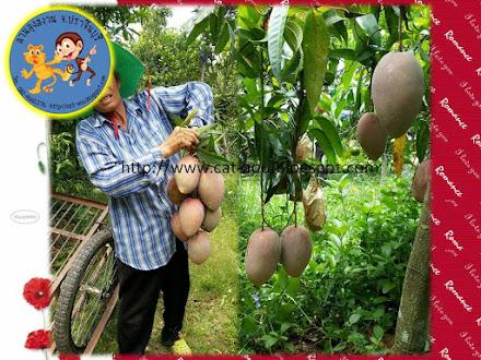 Mango 11