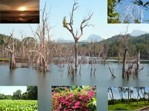 nature-Sri Lanka