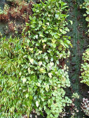 Jardineriagarnica jardines verticales tambien conocidos for Jardines verdes verticales