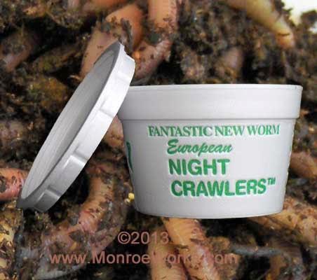 European night crawlers cupped as bait