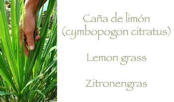 Caña de limón