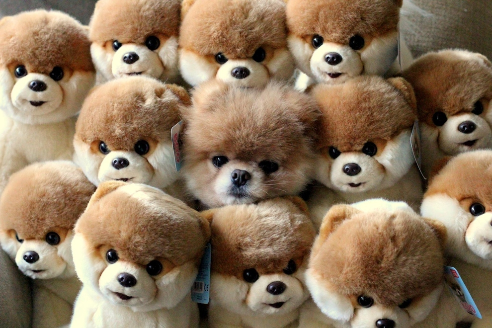 Can you find the real puppy? (2 pic) | Amazing Creatures