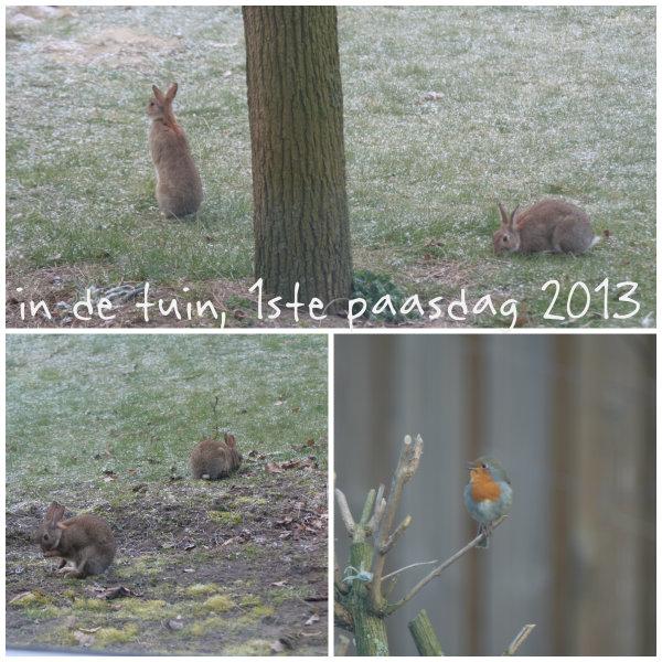 Bezoek in onze tuin op paasochtend, wilde konijntjes en een roodborstje