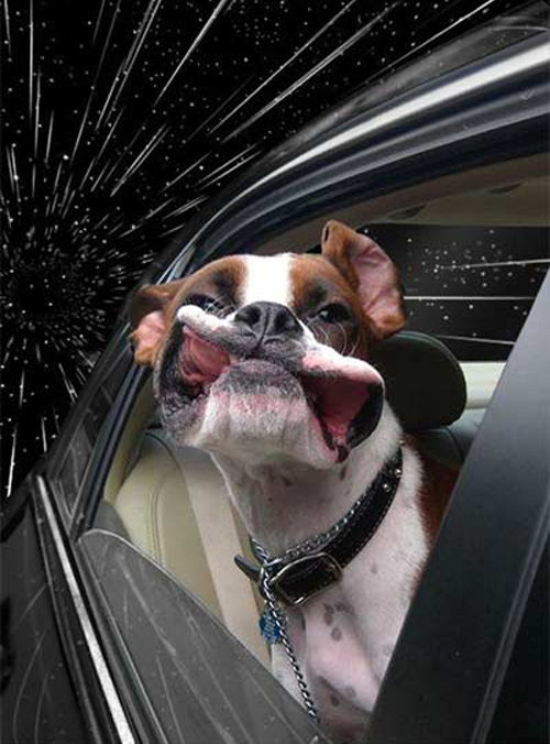 Cachorros no espaço - www.publicitario13.com.br