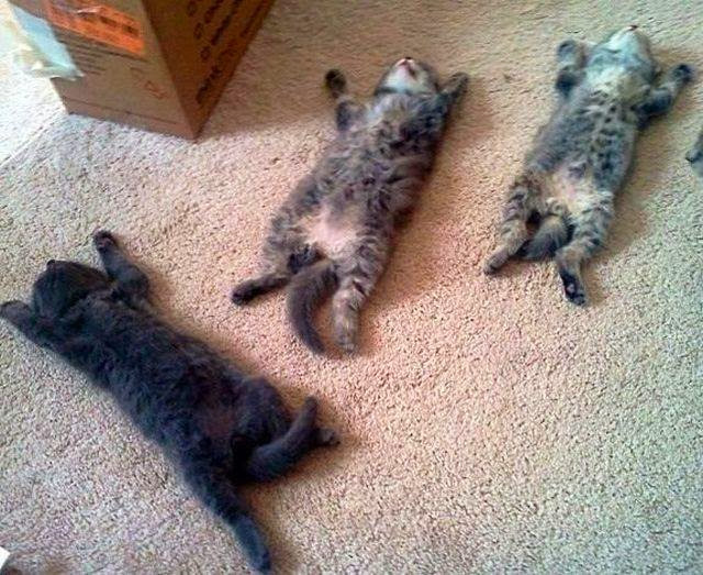 Funny cats - part 85 (40 pics + 10 gifs), kittens sleeping