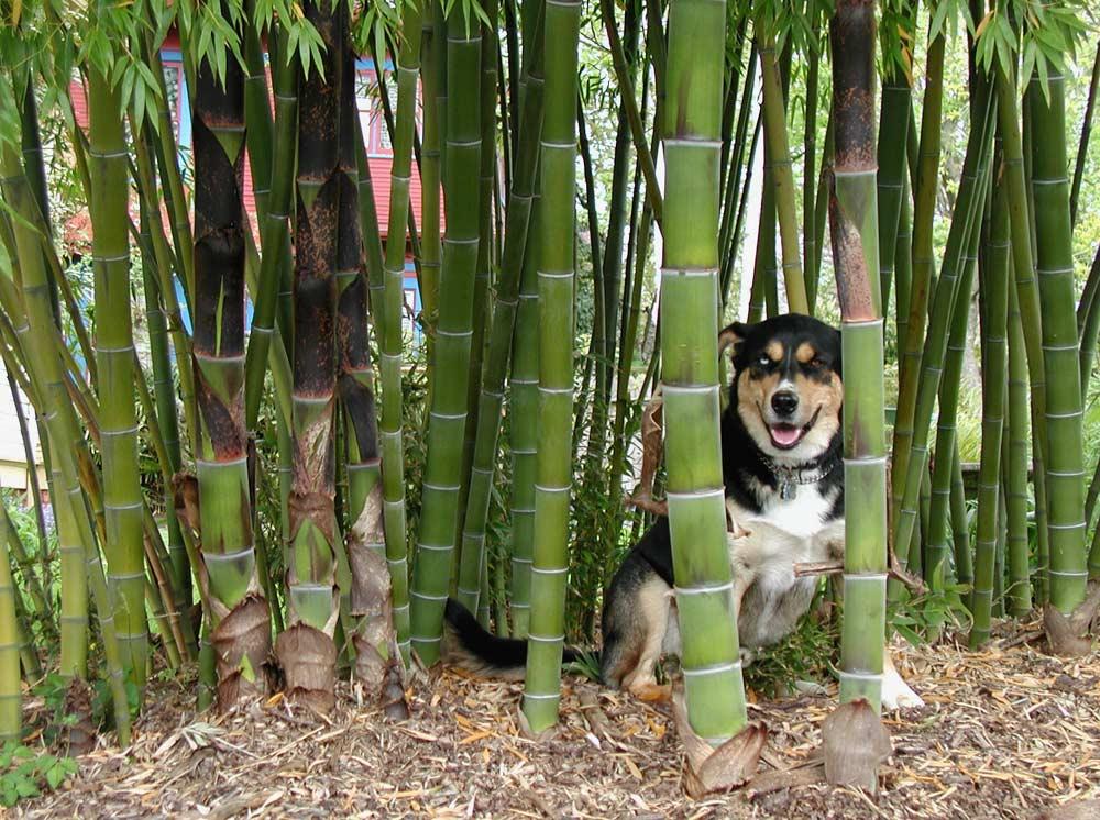 Bamboo Types Bamboo Valance Photo