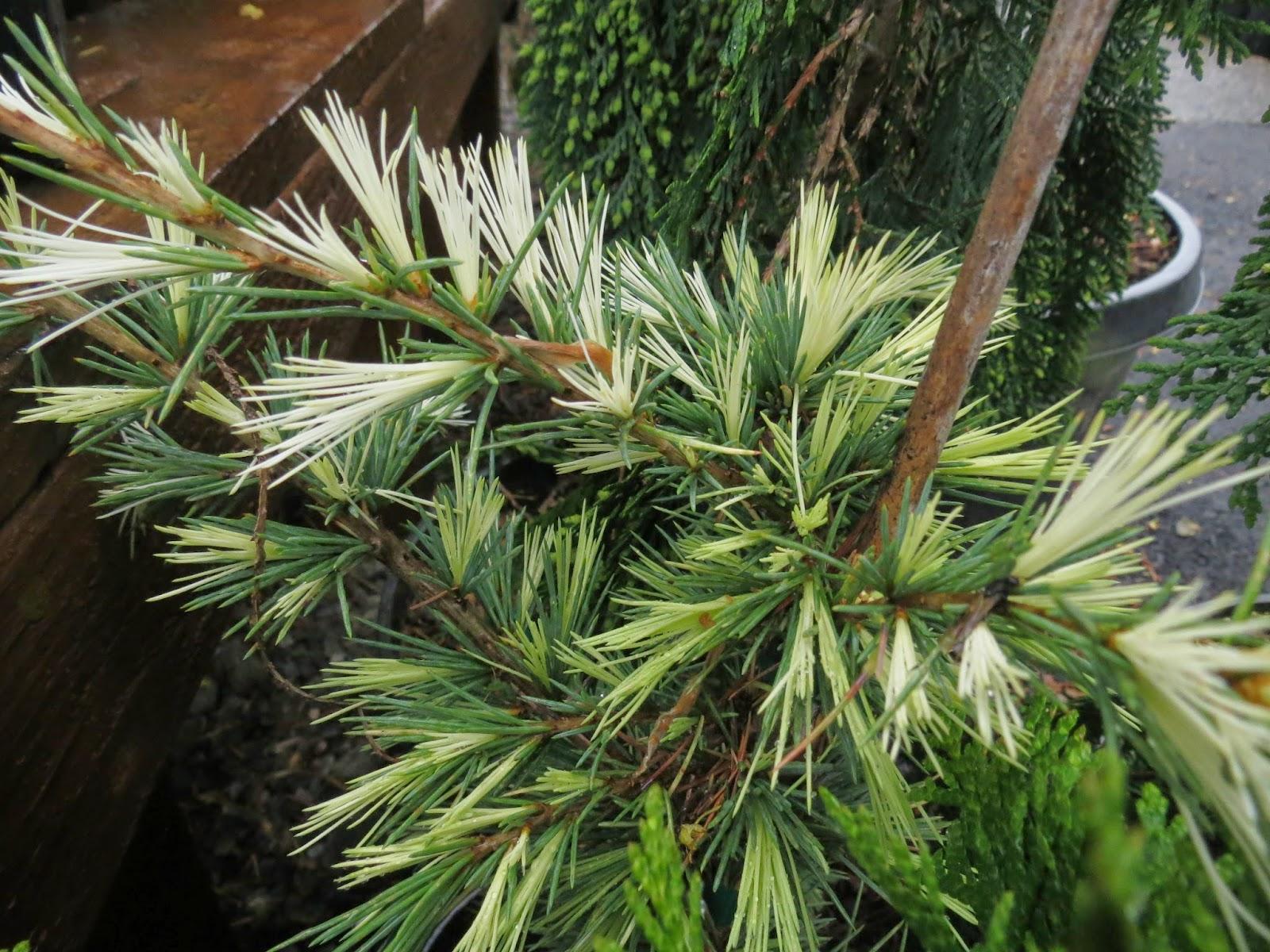The Practical Plant Geek   Blogger