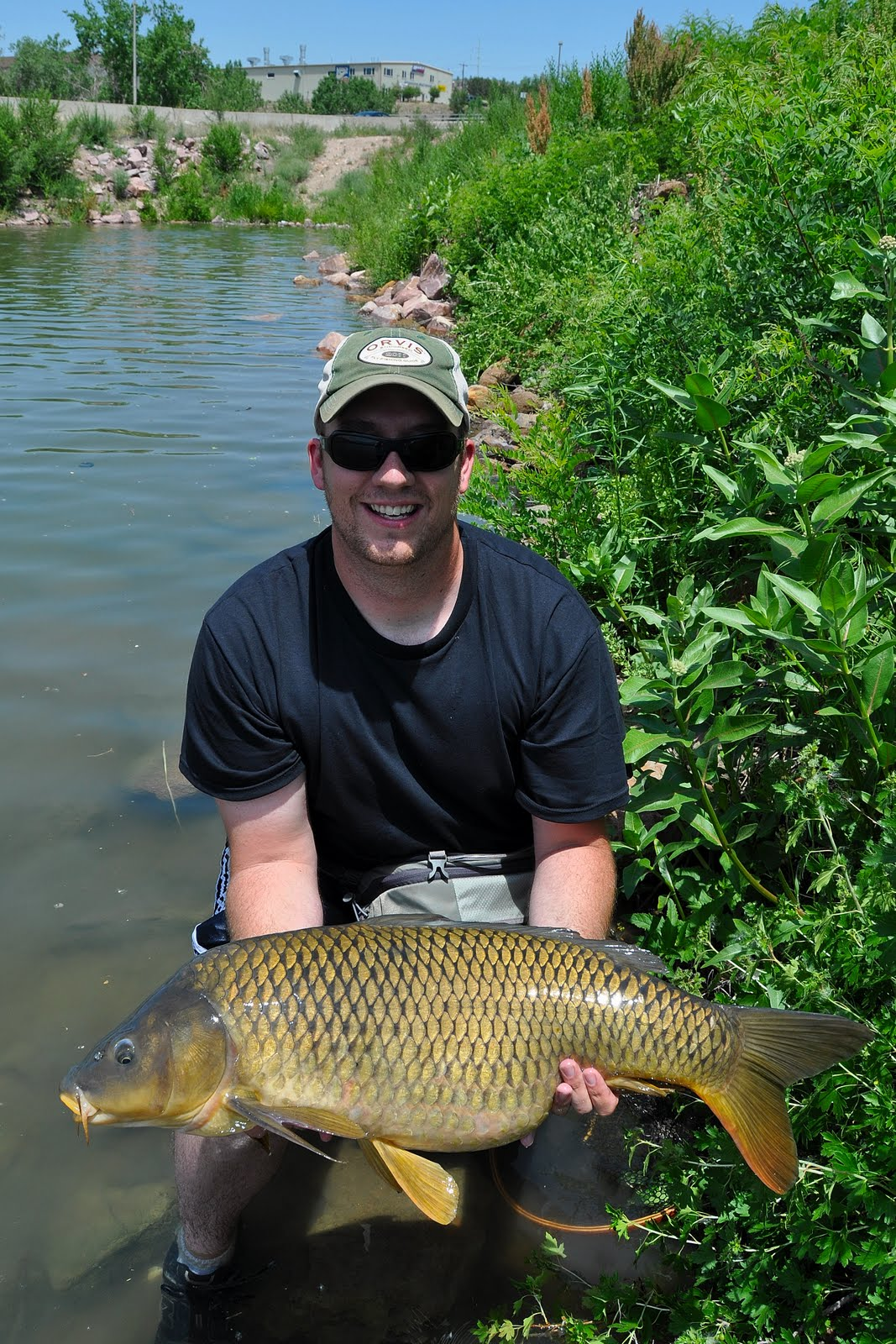 Colorado fly fishing magazine giant carp out of a local for Fly fishing carp