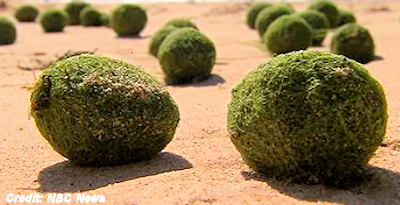 Mysterious Green Balls Wash Up on Australian Beach