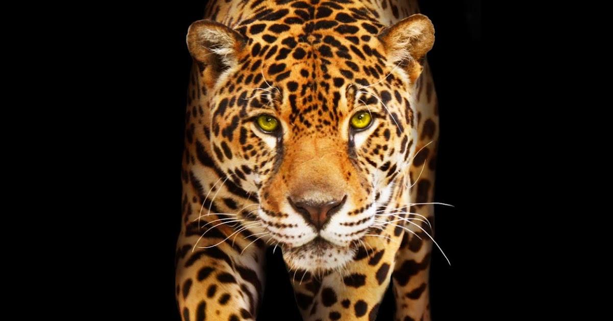 Kid Friendly Information On Jaguars