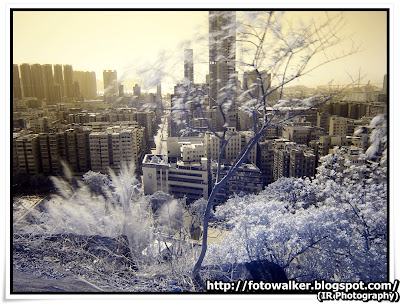 IR Photography@嘉頓山