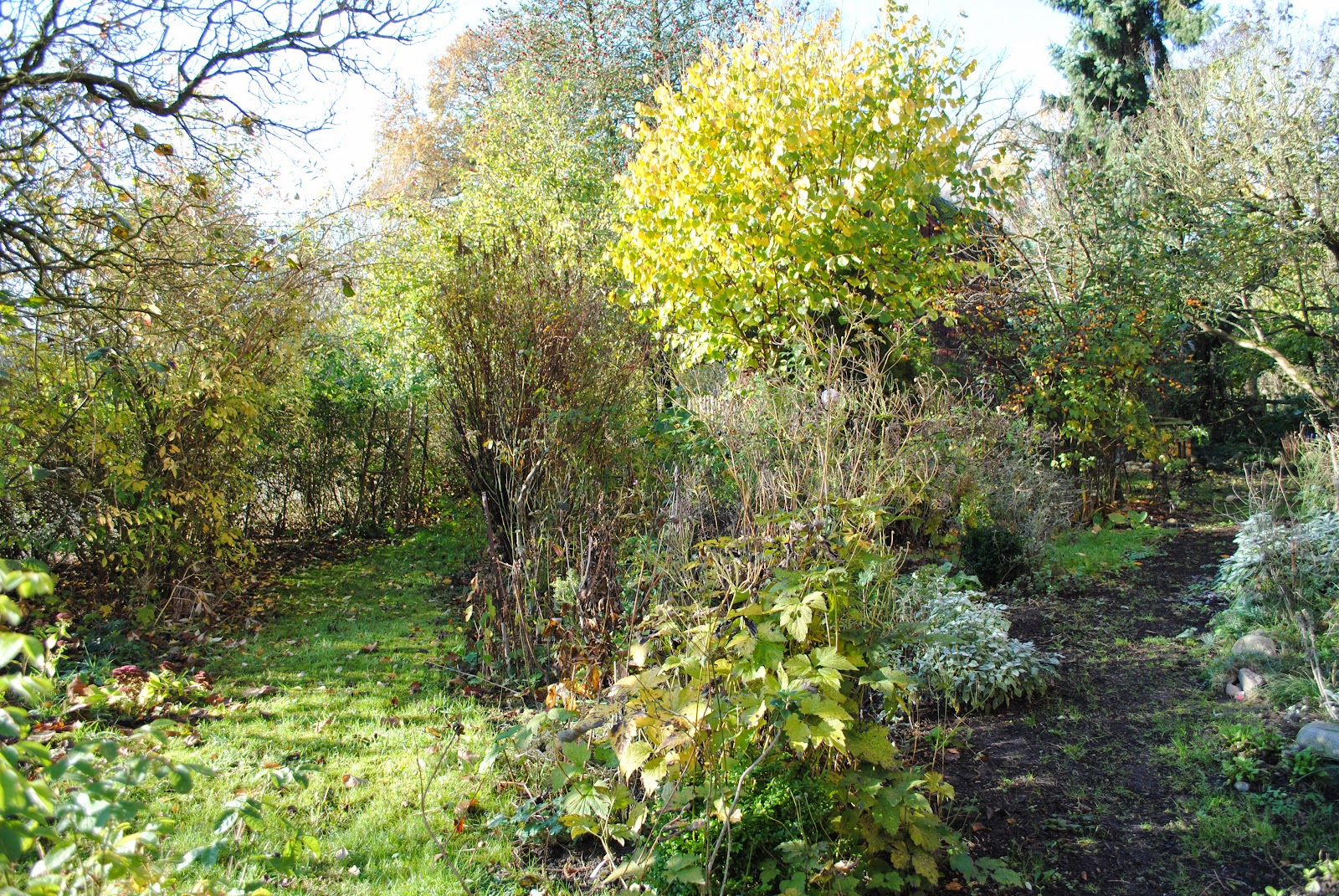 Bäume Vorgarten Nordseite baume vorgarten nordseite hubhausdesign co