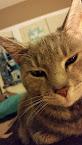 Cat #3: