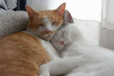 Tư thế ngủ độc đáo của động vật, tư thế ngủ hài hước của động vật,