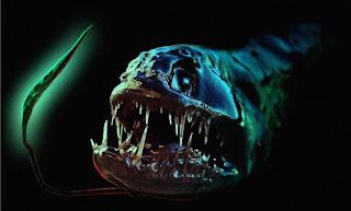 اكثر مخلوقات عالم البحار رعباً 3.jpg
