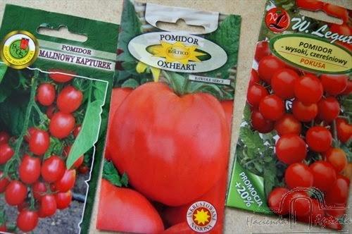 szykujemy rozsady pomidorów