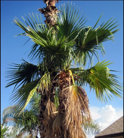 Sam vs. Palm