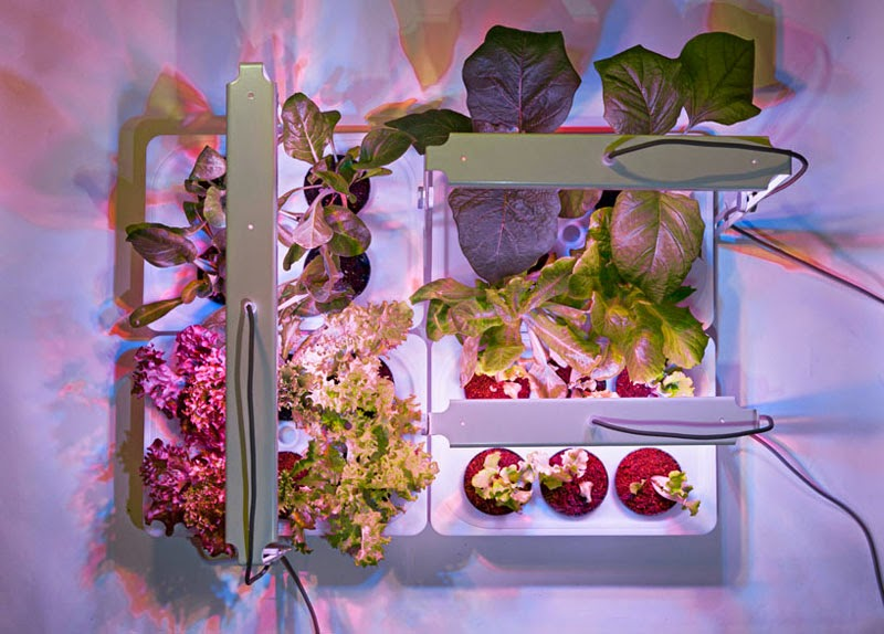Orto Perpetuo, un sistema para cultivar tu huerto en casa