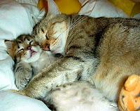 7 Berita Penting Tentang Kucing