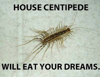 the nature geek a nope with 30 legs the house centipede. Black Bedroom Furniture Sets. Home Design Ideas